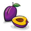 Plum fruits sketch drawing set on white Royalty Free Stock Photography