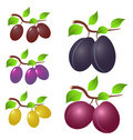 Plum and leaves Stock Photography