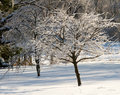 Plum and Pear Trees Coated in Ice in a Snow-covered Backyard Royalty Free Stock Photo