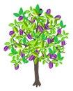 Plum tree Royalty Free Stock Photo
