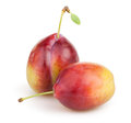 Plum two on white background Royalty Free Stock Photography