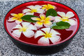 Plumeria float on the water in ceramic bowl Royalty Free Stock Image