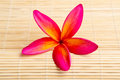 Plumeria flower Royalty Free Stock Images