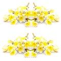 Plumeria flower1 Royalty Free Stock Photo