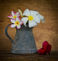 Plumeria flower decoration in house still life Stock Photos