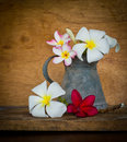 Plumeria flower decoration in house still life Stock Image