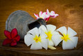 Plumeria flower decoration in house still life Stock Photo