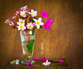Plumeria flower decoration in house still life Royalty Free Stock Images