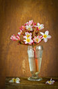 Plumeria flower decoration in house still life Stock Images