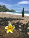 Plumeria flower on the Ocean scene in maui hawaii Royalty Free Stock Photo