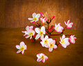 Plumeria flower on table beautiful wood Stock Photography