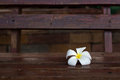 Plumeria flower on wood wooden seat Stock Photos