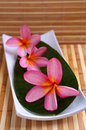 Plumeria flowers on white plate Stock Photos