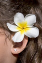 Plumeria, Frangipani Behind Ear Royalty Free Stock Photo
