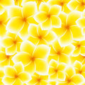 Plumeria frangipani pattern background flower asian yellow white vector illustration Stock Photo