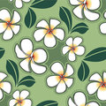 Plumeria vector of design Stock Photos