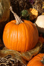 Plump Orange Pumpkin on Display Royalty Free Stock Image