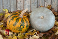 Plumpkins Stock Photography