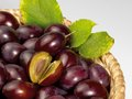 Plums a basket with in grey back Royalty Free Stock Photo