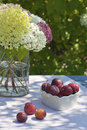 Plums and hydrangeas Stock Photos