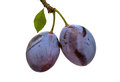 Plums isolated Royalty Free Stock Image