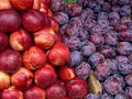Plums and nectarines fruit Royalty Free Stock Image