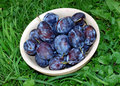 Plums over green grass Royalty Free Stock Image