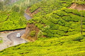 Plush slopes of tea hills covered with plantations Stock Photos