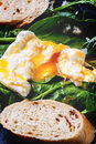 Poached egg and bread on spinach slice of served fresh leaves Stock Images