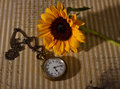 Pocket watch and sunflower colour on paper texture side light Stock Photos