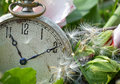 Pocket watch wishes antique with dandelion seeds Royalty Free Stock Photo