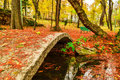 Pod frunze rosii padure toamna galbene banca verde bridge red leaves autumn forest yellow leaves green bank Royalty Free Stock Image