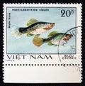 Poecilobrycon eques, series `Aquarium Fish`, circa 1980 Royalty Free Stock Photo