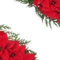 Poinsettia Floral Border Royalty Free Stock Photo