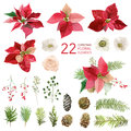 Poinsettia Flowers and Christmas Floral Elements - in Watercolor Royalty Free Stock Photo
