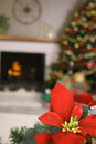 Poinsettia holiday vertical upclose Royalty Free Stock Photos