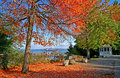 Point Defiance Park in Tacoma WA with red and orange leaves Royalty Free Stock Photo