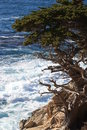 Point lobos state park cypress tree on top of rocky shore in near carmel california Stock Photo