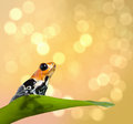 Poison frog on tropical background with copy space dart ranitomeya fantastica exotic pet animal from amazon rainforest in Royalty Free Stock Image