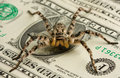 Poison spider safeguarding money Royalty Free Stock Images