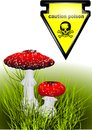 Poisonous mushrooms amanita and sign pioson caution Stock Images