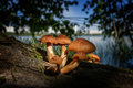 Poisonous mushrooms in the forest close up Stock Images