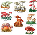 Poisonous mushrooms vector collection of Royalty Free Stock Image