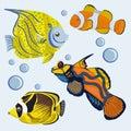 Poissons tropicaux coral reef fishes brillamment colorée Photographie stock libre de droits