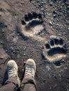 Polar Bear Footprints