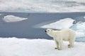 Polar bear in natural arctic environment Royalty Free Stock Photography