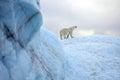 Polar bear survival in arctic pollution problems Stock Photos