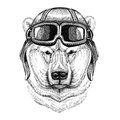 Polar bear wearing leather helmet Aviator, biker, motorcycle Hand drawn illustration for tattoo, emblem, badge, logo