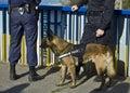 Police dog Royalty Free Stock Photo