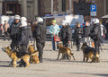 Police with dogs and in action on the main market in krakow observation of football fans Royalty Free Stock Photos